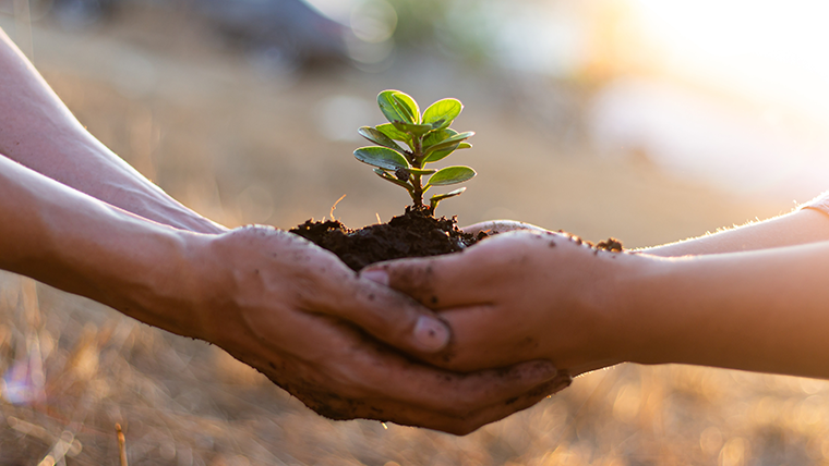 Dłonie trzymające roślinę - Zrównoważony rozwój – co to jest? - Velvet