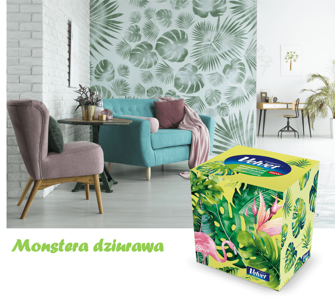 Pokój z dwoma fotelami różowym i zielonym na tle tapety z roślinami - prezentacja chusteczek higienicznych Velvet w pudełku z motywem roślinnym