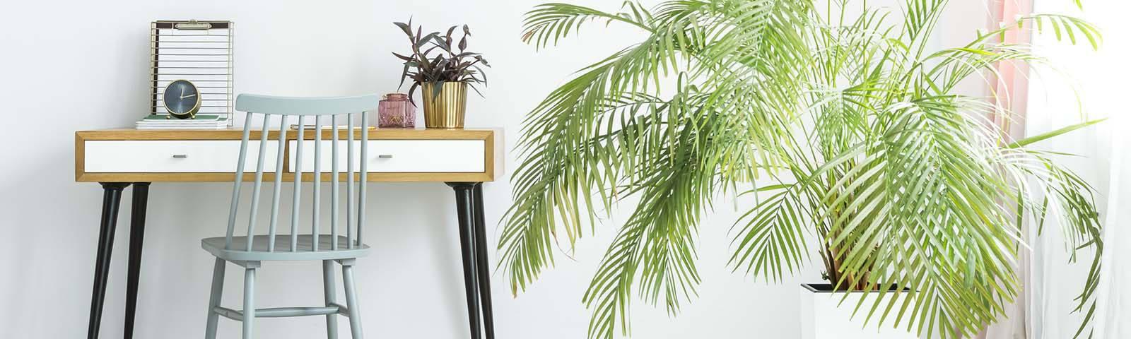 3 pomysły na idealne rośliny do salonu